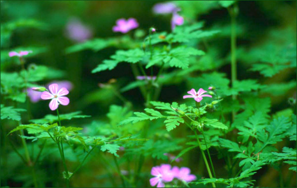 Flowers in a sea of green, life and beauty