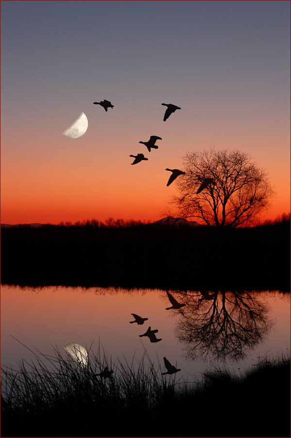 Wild geese over a moonlit lake