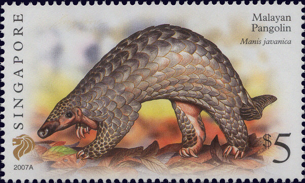 pangolin in Singapore