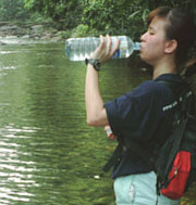 Drinking water from a jungle stream